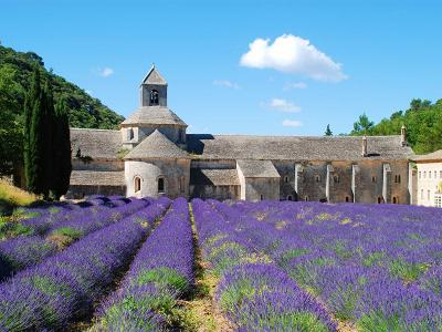 Abbaye Notre Dame de Sénanque, Gordes, Luberon, lavender