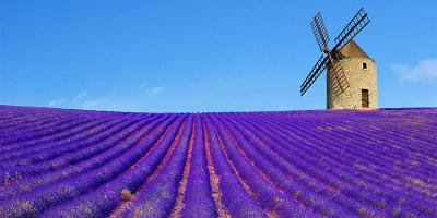 Lavender field and mill