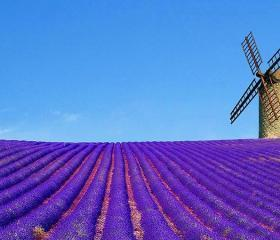 Summer of Lavender: Blooming Fields and Harvest Feasts 2015